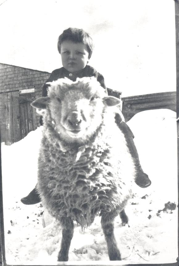 Portrait of unknown boy sitting on a sheep in the snow, Pictou ca 1900s